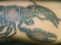 lobster tattoo by Alex